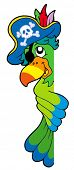 Lurking pirate parrot - vector illustration.