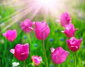 stock photo of may-flower  - Beautiful flowers - JPG