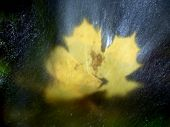 Постер, плакат: Maple Leaf In Shinning Drops Of Stream Drops Lightpainting