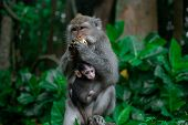 Closed Up Mom Hug With Baby Monkey, Thailand, Family Has A Monkey Mother And A Cute Monkey Baby. Mon poster