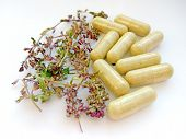 Herbal Medicine Pills With Dry Natural Herbs On White Background. Concept Of Herbal Medicine And Die poster