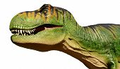 image of tyrannosaurus  - The head of a large model Tyrannosaurus Rex dinosaur isolated on a pure white background - JPG