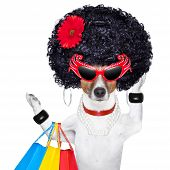 stock photo of puppy christmas  - diva dog shopping like a pro holding a bunch of bags - JPG
