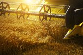 stock photo of combine  - Combiner harvesting the wheat field at sunset - JPG