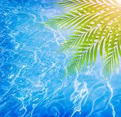 Closeup on fresh green palm tree leaves border on beautiful clean water background, pool on the trop
