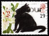 Postage Stamp Gb 1995 Black Cats