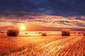picture of farm landscape  - Rural landscape - JPG