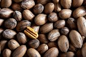 pic of pecan tree  - Pecan nuts in and out of shells - JPG