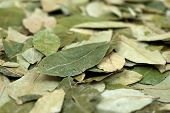 Cocaine Raw Material - Dried Coca Leaves poster