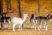 stock photo of deer horn  - Herd of deer in the wild - JPG