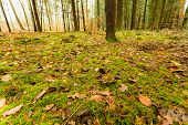 stock photo of floor covering  - Autumnal landscape - JPG