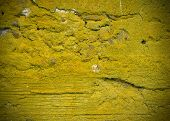 picture of excrement  - Concrete wall texture with moss and white stains - JPG