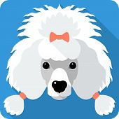 pic of poodle  - Vector serious dog white Poodle icon flat design - JPG