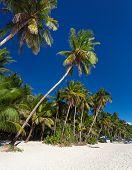 foto of boracay  - Coconut palm trees on tropical beach Philippines Boracay  - JPG