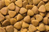 The dry kibble dog food. Top view. poster