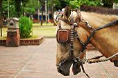 picture of workhorses  - Horse Saddled and with Blinds Eye Patch - JPG