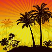 Labels With Tropical Landscape, Palms Trees And Exotic Plants Black Silhouettes On Background With M poster