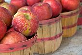 apples in bushel baskets
