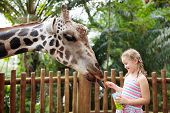 Family Feeding Giraffe In Zoo. Children Feed Giraffes In Tropical Safari Park During Summer Vacation poster