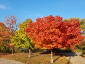 Fall Landscape - Fall With Colorful Fall Trees And Fallen Fall Leaves Covering The Ground, Fall Tree poster