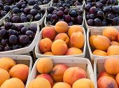 stock photo of bing  - Bing cherries and apricots at the farmers market - JPG