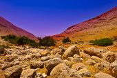 picture of samaria  - The Stone Hills of Samaria Israel. Sunrise