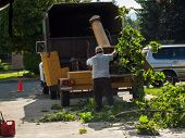 picture of arborist  - A Man Putting Branches in a Wood Chipper - JPG