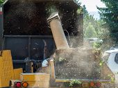 foto of arborist  - Wood Chipper Shredding a Tree into a Truck - JPG
