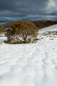 stock photo of bogong  - Bogong High Plains after early autumn snowfall - JPG