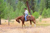stock photo of reign  - Young cowboy riding his horse in the field - JPG