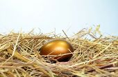 foto of laying eggs  - Golden Egg on a bed of straw - JPG