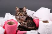 picture of septic  - Cute kitten playing with roll of toilet paper - JPG