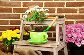 stock photo of flower pots  - Flowers in pot on stepladder - JPG