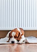 foto of floor heating  - The dog has a rest on wooden to a floor near to a warm radiator - JPG