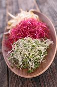 picture of soybean sprouts  - sprouts - JPG