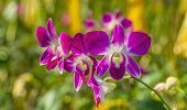 picture of orquidea  - A branch of pink orchid orchid in the garden - JPG