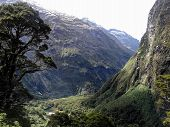 picture of cheeky  - Stunning scenery flora and fauna on the Milford Track - JPG