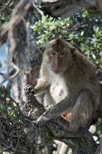 image of monkeys  - Monkey on a tree - JPG