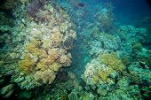 stock photo of biodiversity  - Underwater landscape - JPG