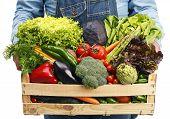 picture of farmer  - Farmer holding wooden box full of fresh vegetables - JPG