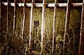 foto of tall grass  - black cat hiding behind a wooden gate in the tall grass - JPG