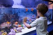 picture of starfish  - Young man touching a starfish - JPG