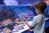image of starfish  - Young man looking at starfish in tank at the aquarium - JPG