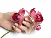 Beautiful Hand With Perfect Nail Pink Manicure And Purple Orchid Flower. Isolated On White Backgroun
