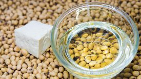 stock photo of soybeans  - Soybeans oil poured on glass bowl with tofu on soybeans background - JPG