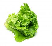 stock photo of photosynthesis  - Fresh Leaf lettuce isolated on white with natural shadow - JPG