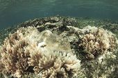 Coral bleaching. Dead and dying coral killed by global warming, climate change poster