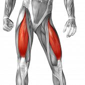 Concept conceptual 3D illustration fit strong front upper leg human anatomy, anatomical muscle isola poster