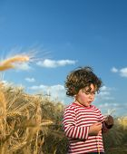 little child in a wheat field