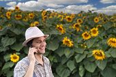 stock photo of land-mass  - farmer standing in front of a sunflower field talking on the phone - JPG